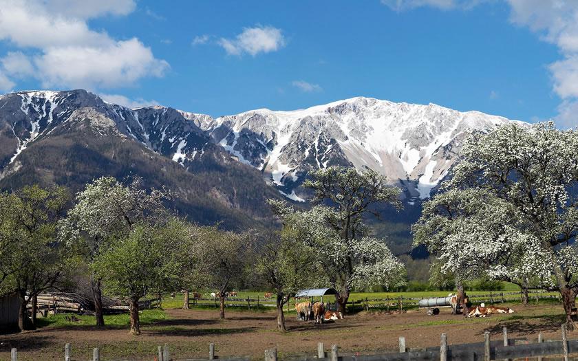 Springtime in the Schneeberg region