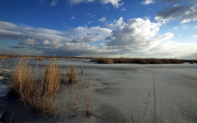 Winter ice on the Neusiedler See