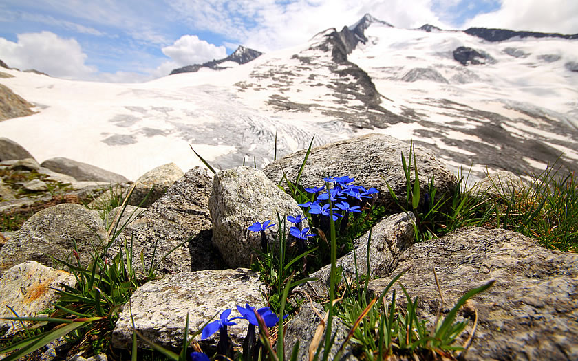 Gentians and glaciers in the Salzburgerland