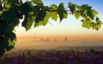 View of Vienna from the green belt