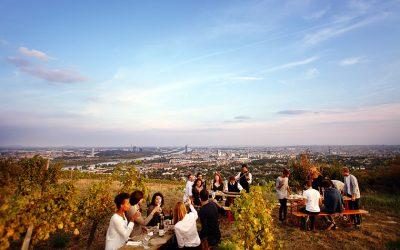 The Wieninger vineyard above Vienna