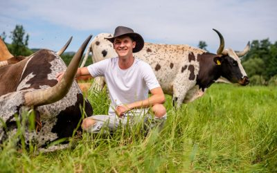 Texas Longhorn cattle breeding in Austria