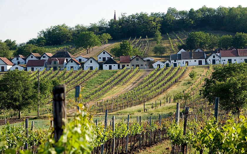 A street of wineries in Galgenberg