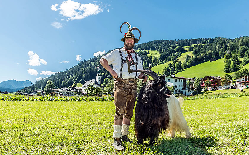 Prize goat in the Wildschönau valley in the Tyrol
